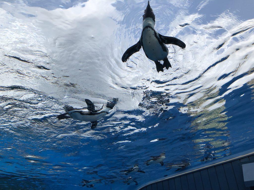 池袋サンシャイン空飛ぶペンギン